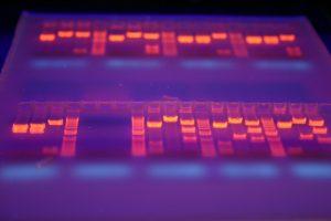 LP Bio-industries et biotechnologies